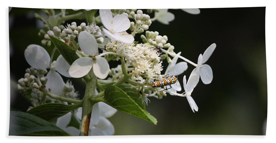 Ailanthus Beach Towel featuring the photograph Ailanthus Webworm Moth 1 by Teresa Mucha