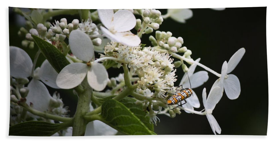 Ailanthus Beach Towel featuring the photograph Ailanthus Webworm Moth 2 by Teresa Mucha