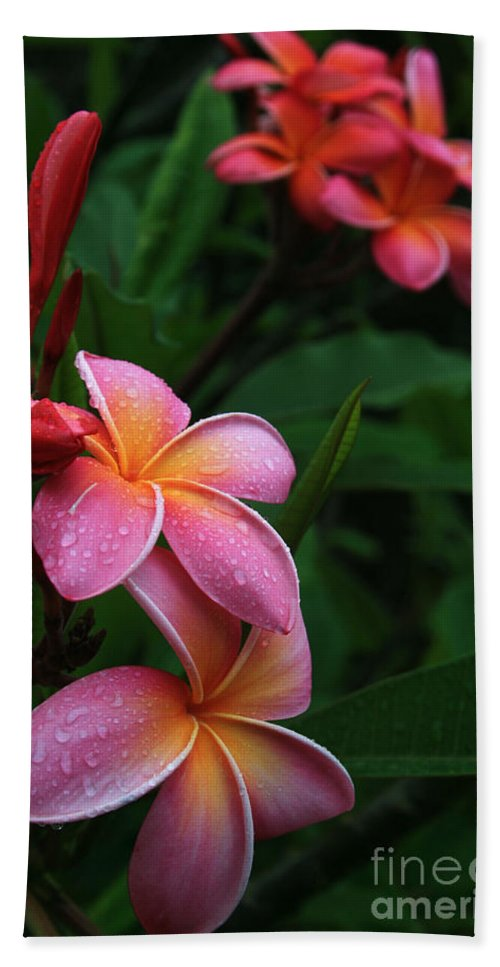 Aloha Beach Towel featuring the photograph Akeakamai Pua Melia Tropical Plumeria by Sharon Mau