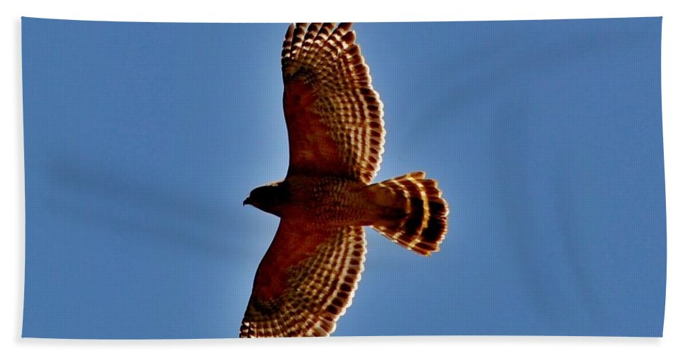 Eagle Beach Towel featuring the photograph Osprey by Eileen Brymer