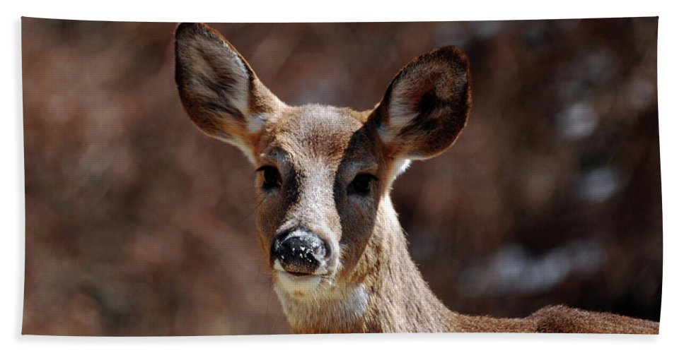 Deer Beach Towel featuring the photograph All Ears by Lori Tambakis