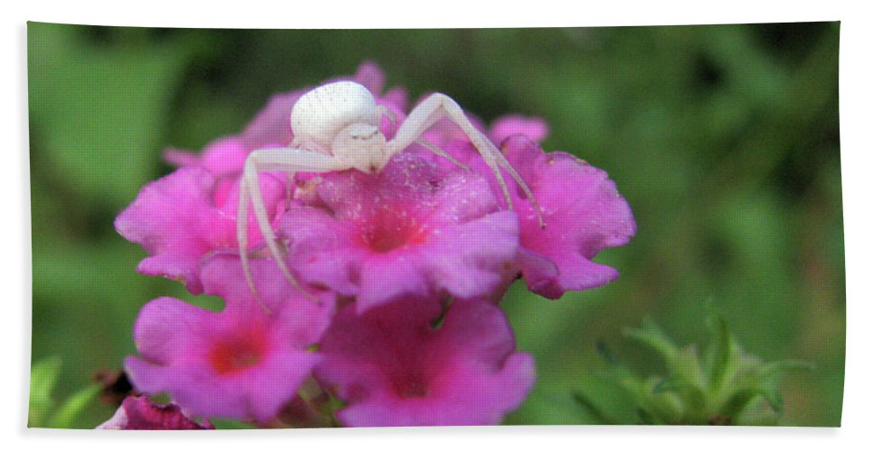 Insect Beach Towel featuring the photograph All White by Donna Brown