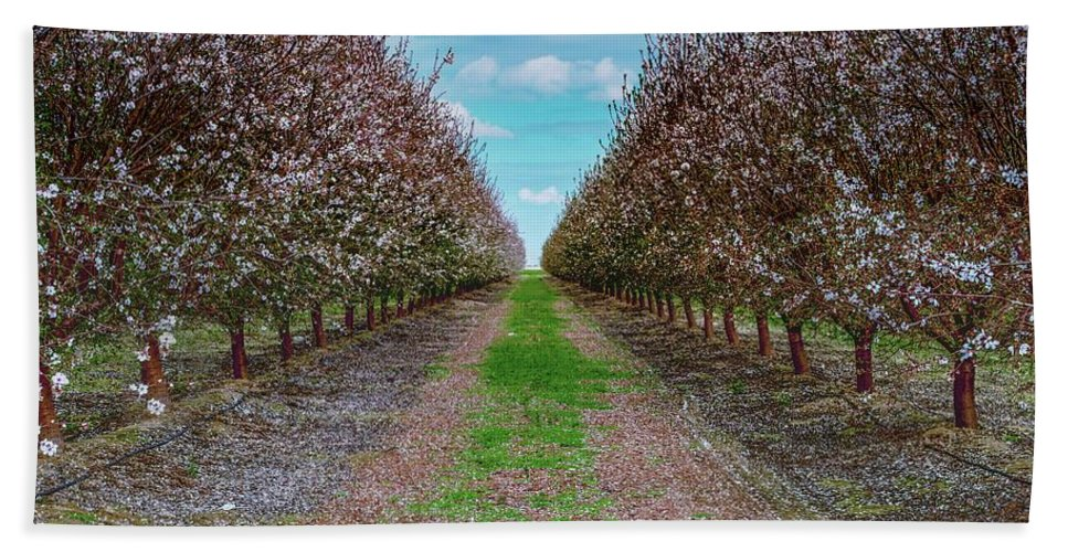 Thomas Gartner Beach Towel featuring the photograph Almond Trees Of Button Willow by Thomas Gartner