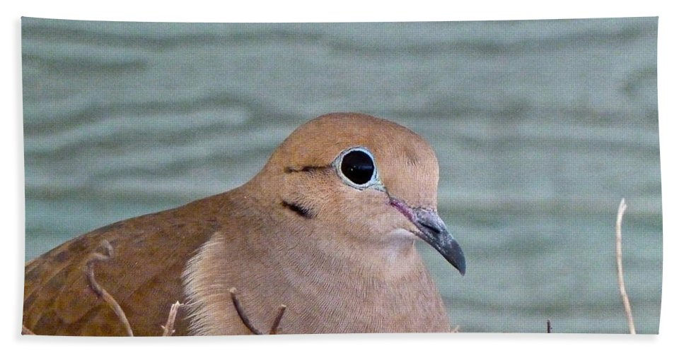 Birds Beach Towel featuring the photograph Almost A Mother by Diana Hatcher