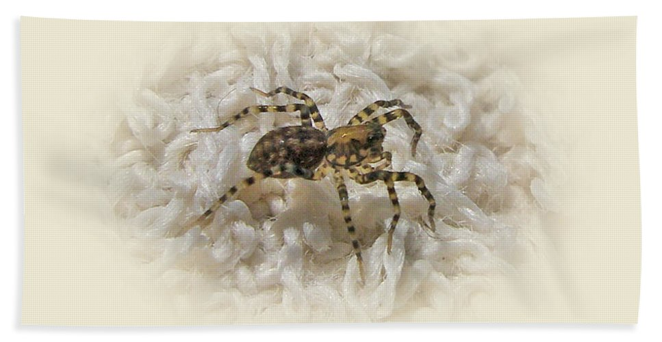 Spider Beach Towel featuring the photograph Along Came A Spider by Mother Nature