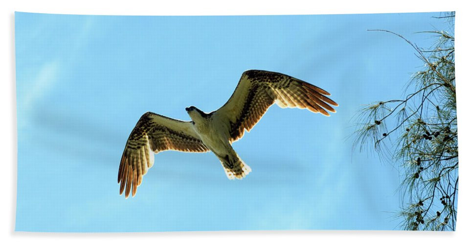 Osprey Beach Towel featuring the photograph Along The Austalian by William Tasker