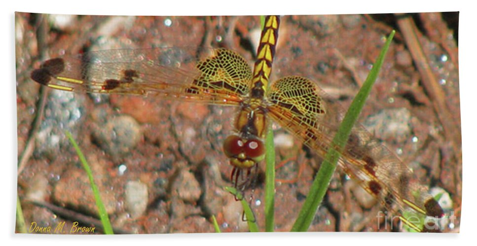 Dragonfly Beach Towel featuring the photograph Amanda's Pennant Dragonfly Female by Donna Brown
