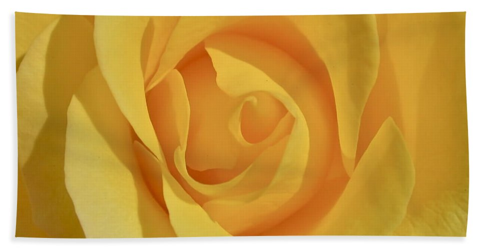 Photograph Or Yellow Rose Beach Towel featuring the photograph Amarillo by Gwyn Newcombe