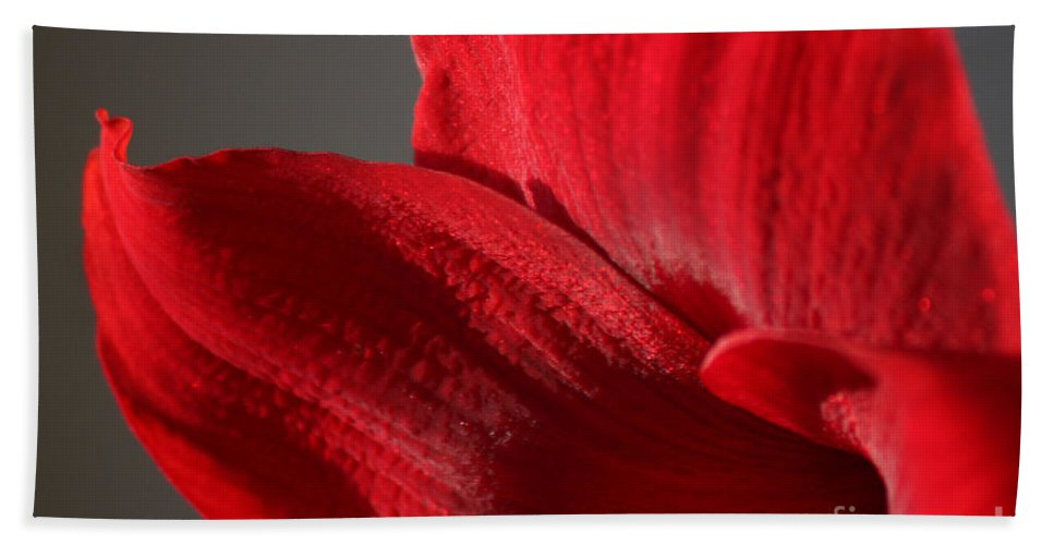 Flower Beach Towel featuring the photograph Amaryllisleaves6698 by Gary Gingrich Galleries