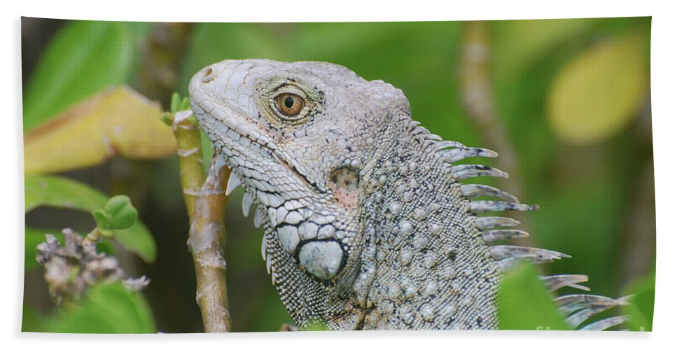 Iguana Beach Towel featuring the photograph Amazing Gray Iguana Sitting In The Top Of A Bush by DejaVu Designs