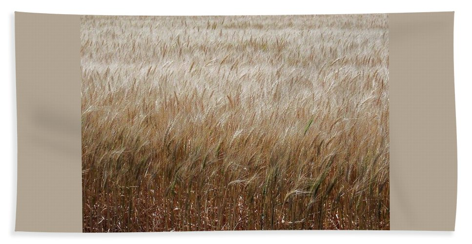 Crain Beach Towel featuring the photograph Amber Waves Of Grain by Amber Stubbs