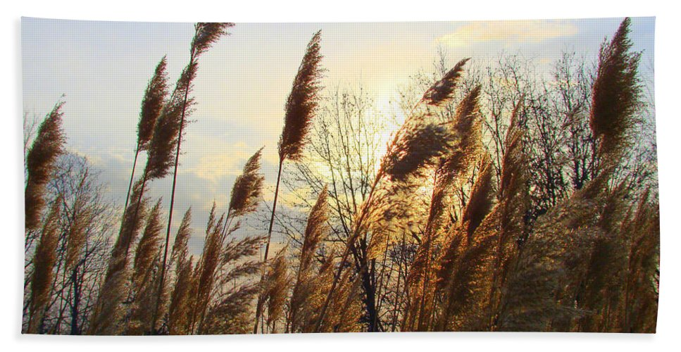 Pampasgrass Beach Towel featuring the photograph Amber Waves Of Pampas Grass by J R Seymour