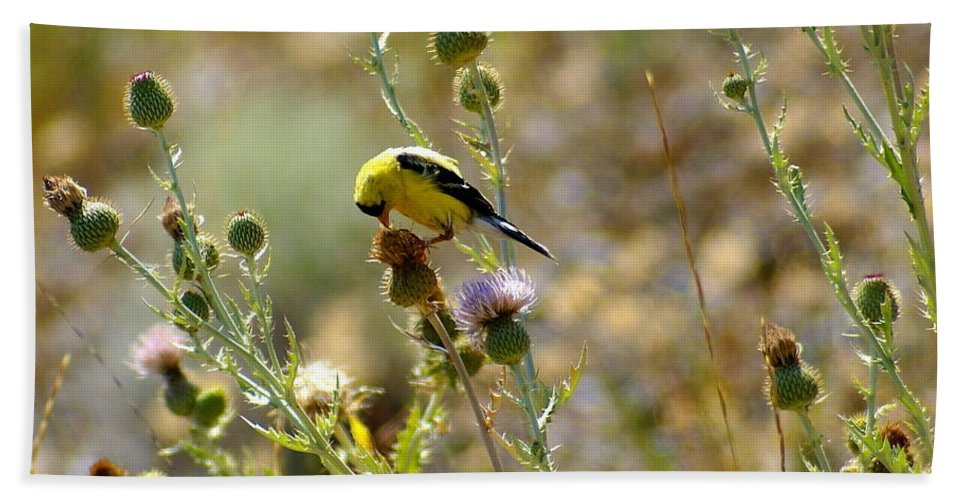 Spokane Beach Towel featuring the photograph American Goldfinch by Ben Upham III