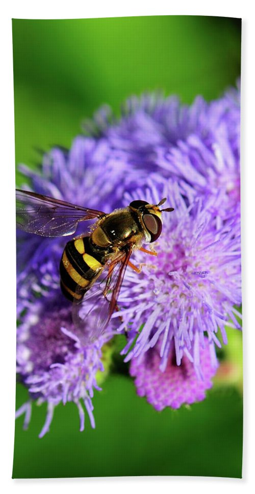 Hoverfly Beach Towel featuring the photograph American Hoverfly by Betty LaRue