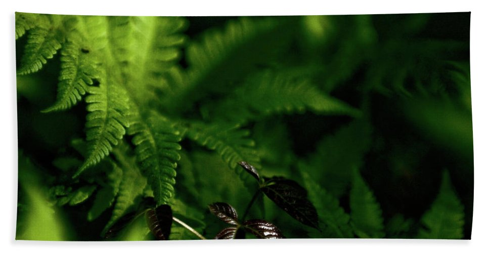 fern Beach Towel featuring the photograph Amongst The Fern by Paul Mangold