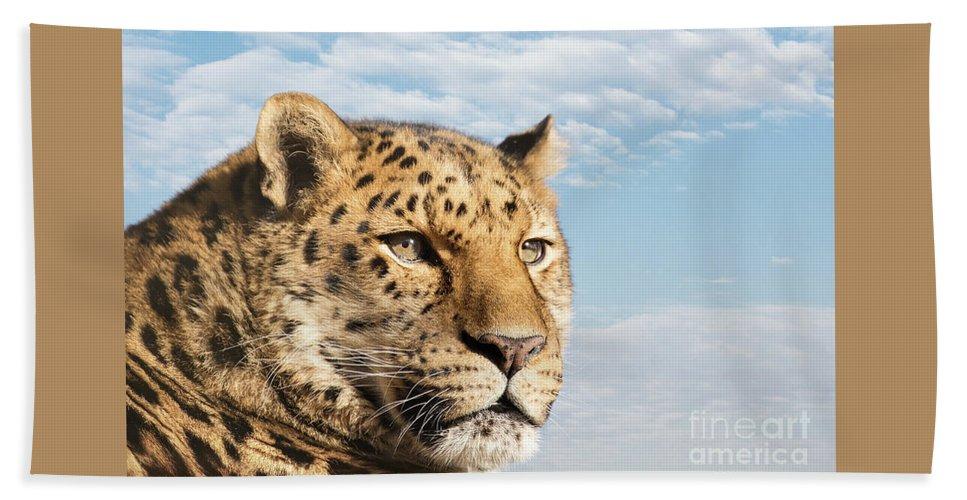 Leopard Beach Towel featuring the photograph Amur Leopard Against Blue Sky by Jane Rix