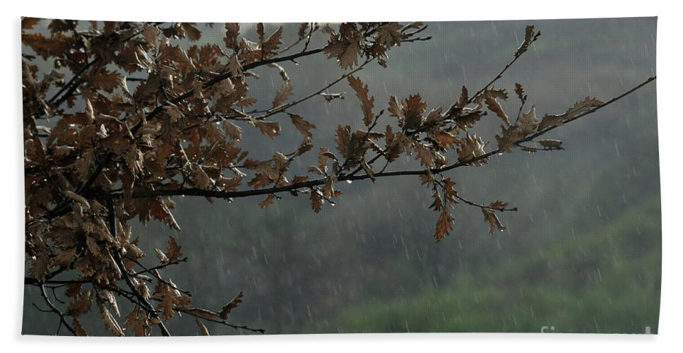 Leaves Beach Towel featuring the photograph An Autumn Day by Ilaria Andreucci