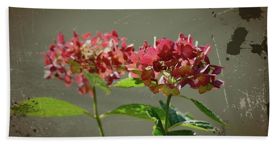 Antique Picture Of Flowers Beach Towel featuring the photograph An Old Picture by Randy J Heath