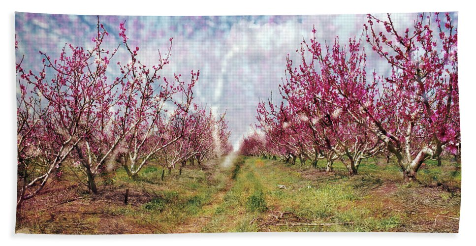 An Orchard In Blossom In The Golan Heights Beach Towel featuring the photograph An Orchard In Blossom In The Golan Heights by Dubi Roman