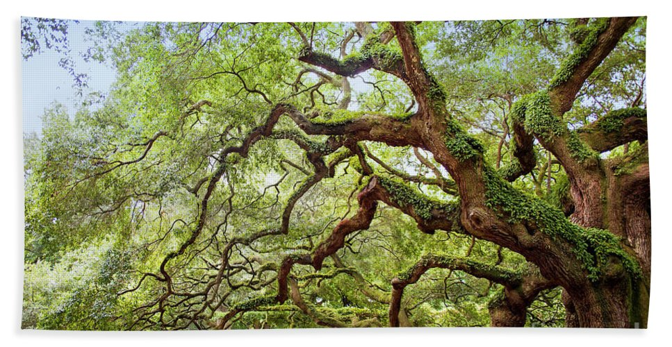 Angel Oak Beach Towel featuring the photograph Ancient Angel Oak Tree by Sharon McConnell