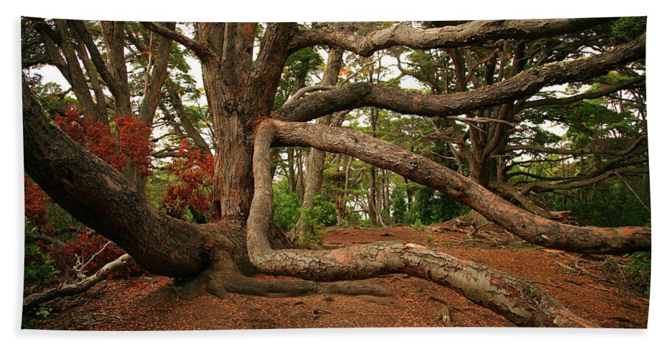 Tree Beach Towel featuring the photograph Ancient Forest by Bruce J Robinson