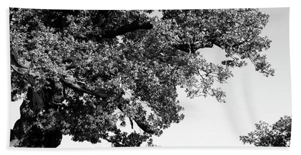 Woodland Beach Towel featuring the photograph Ancient Oak, Bradgate Park by John Edwards