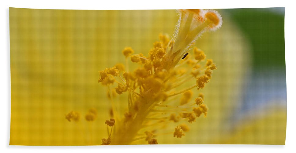Hibiscus Beach Towel featuring the photograph And So It Begins by Michiale Schneider
