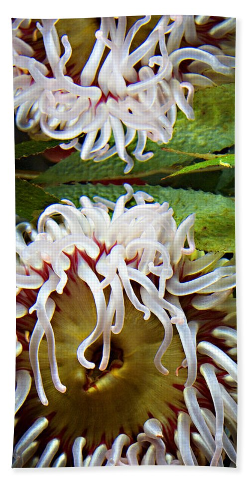 Aquarium Beach Towel featuring the photograph Anenome Reflection by Marilyn Hunt