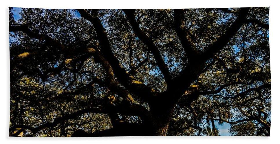 Angel Oak Beach Towel featuring the photograph Angel Oak Tree by Angela Sherrer