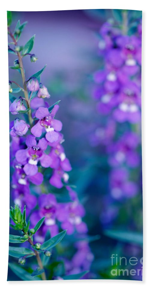 Floral Beach Towel featuring the photograph Angelonia Serena by Betty LaRue