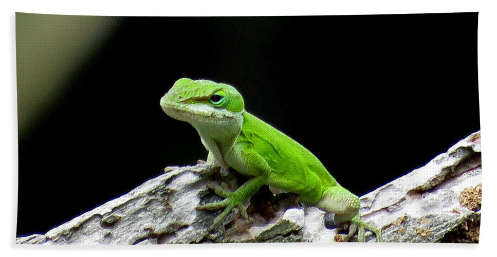 Anole Beach Towel featuring the photograph Anole 15 by J M Farris Photography