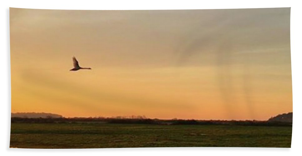 Natureonly Beach Towel featuring the photograph Another Iphone Shot Of The Swan Flying by John Edwards