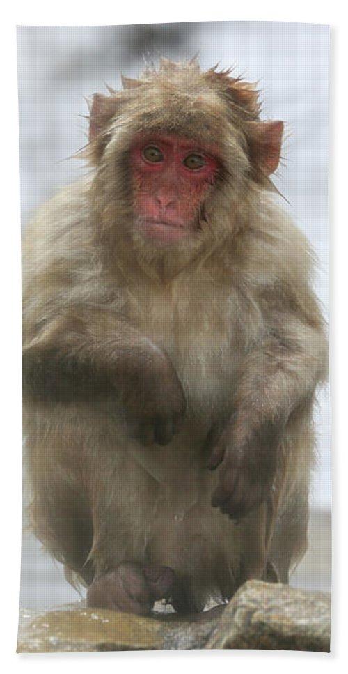 Snow Monkeys Beach Towel featuring the photograph Any Ideas by Leigh Lofgren