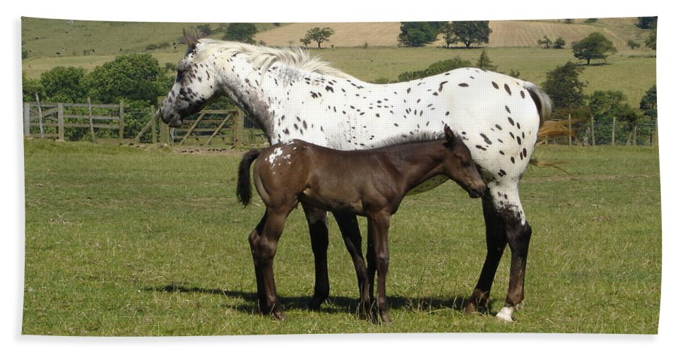 Horse Beach Towel featuring the photograph Appaloosa Mare And Foal by Susan Baker