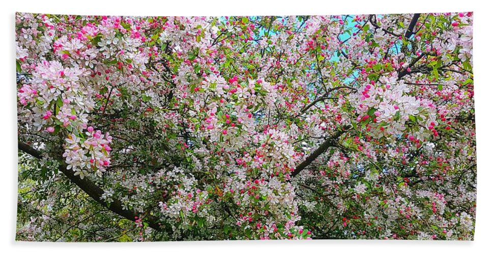 Appleblossom Beach Towel featuring the photograph Apple Blossom Fresh by Rowena Tutty