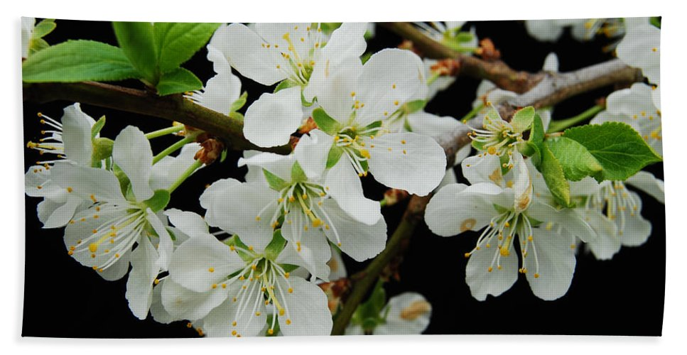 Apple Beach Towel featuring the photograph Apple Blossoms 3 by Michael Peychich