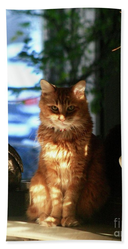 Red Tabby / Maine Coon Beach Towel featuring the photograph Appollo Watching by Gregory E Dean