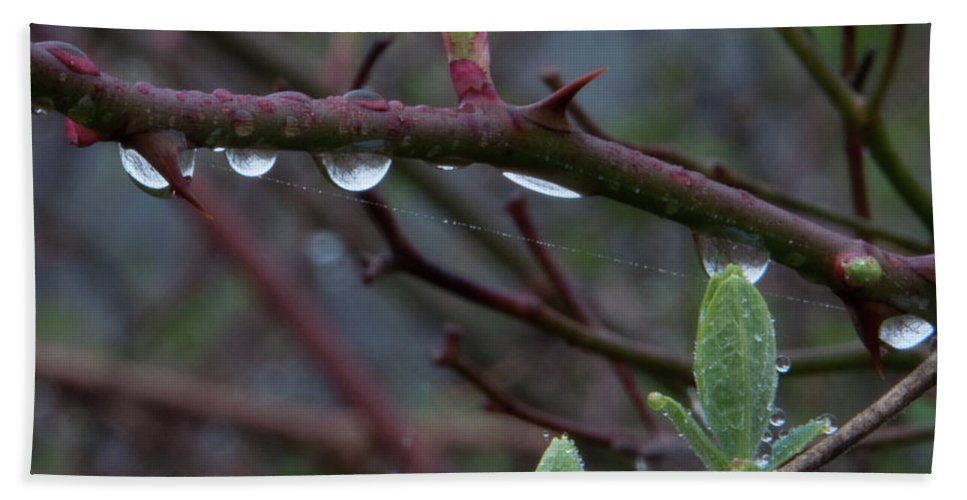 Photography Beach Towel featuring the photograph April Showers by Steven Natanson