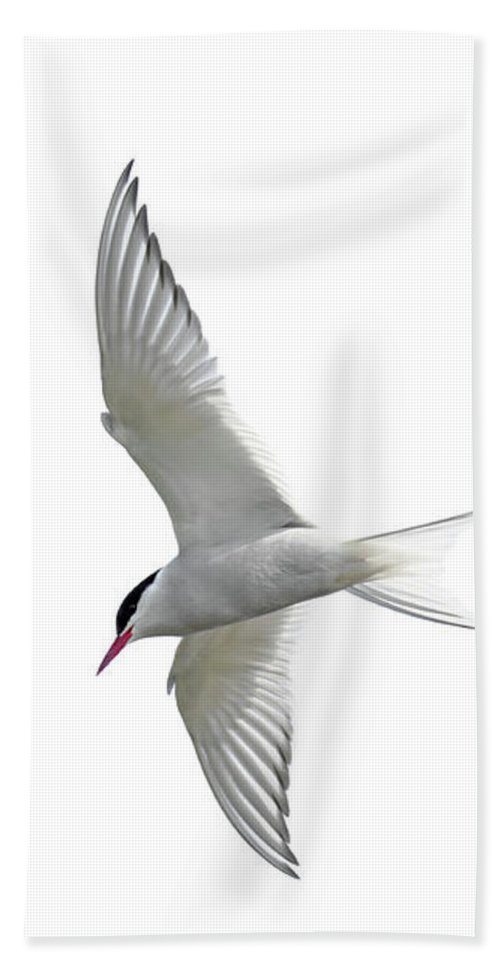 Arctic Tern Beach Towel featuring the photograph Arctic Tern Flying In Mist by Arterra Picture Library