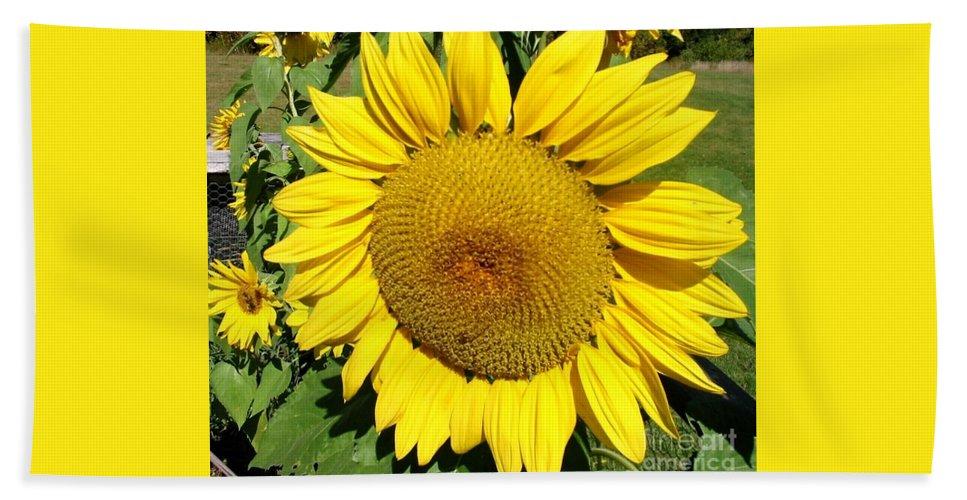 Sun Beach Towel featuring the photograph Arikara Sunflower by Karen Sloan