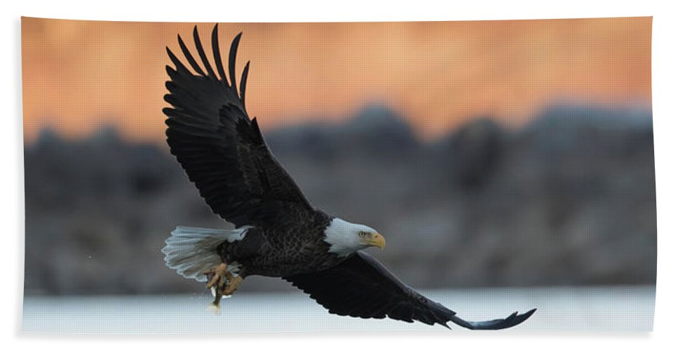 Eagle Beach Towel featuring the photograph Evening Catch by Rhoda Gerig