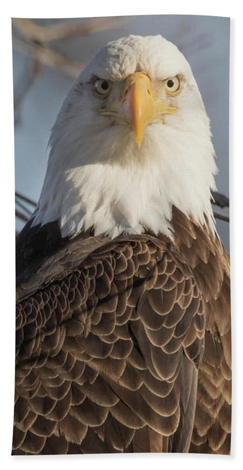 Eagle Beach Towel featuring the photograph You Again by Rhoda Gerig