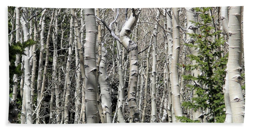 Great Basin Np Beach Towel featuring the photograph Aspen Stand by Rich Bodane
