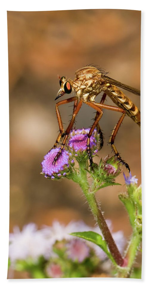 Assassin Fly Beach Towel featuring the photograph Assasin Fly by Betty LaRue