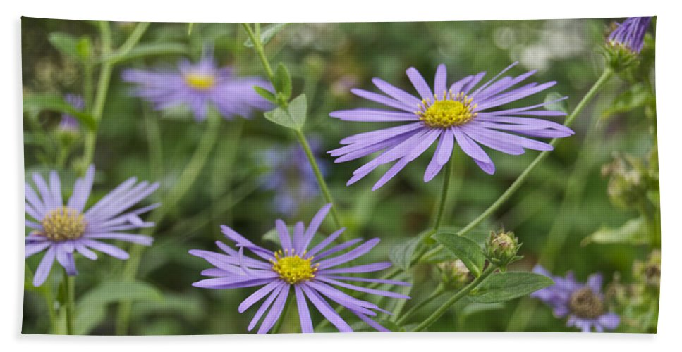 Flower Beach Towel featuring the photograph Aster by Michael Peychich
