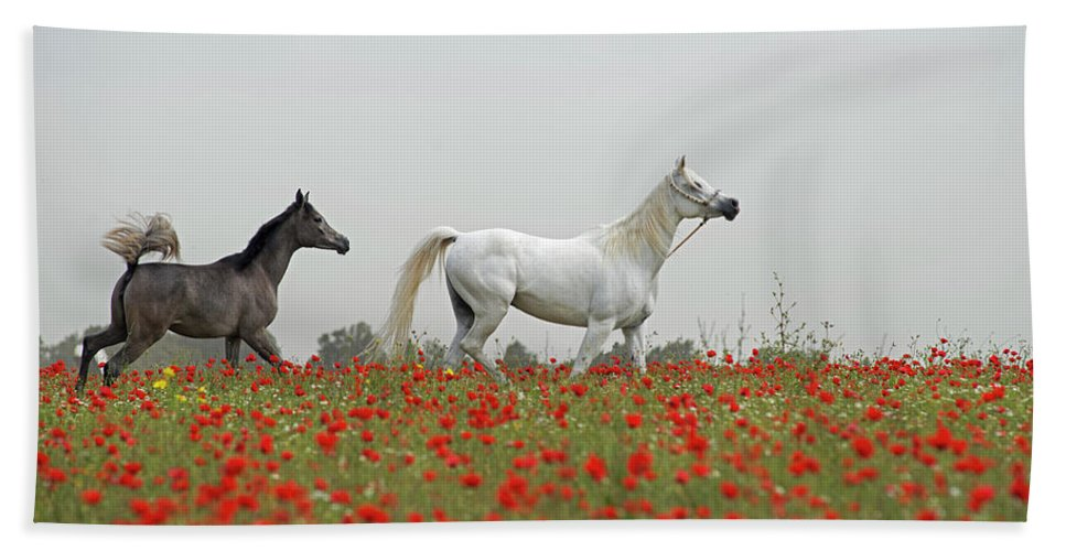 Poppies Beach Towel featuring the photograph At The Poppies' Field... by Dubi Roman