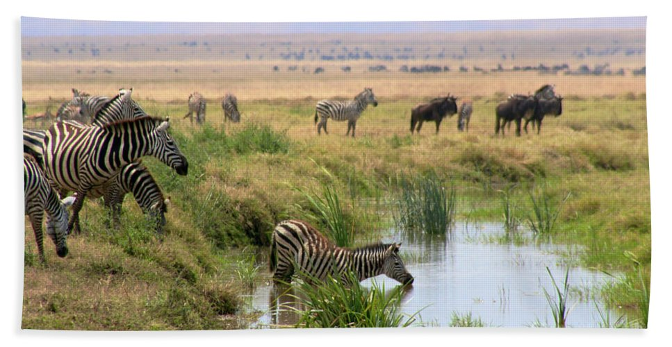 Beach Towel featuring the photograph At The Watering Hole by Bruce Block