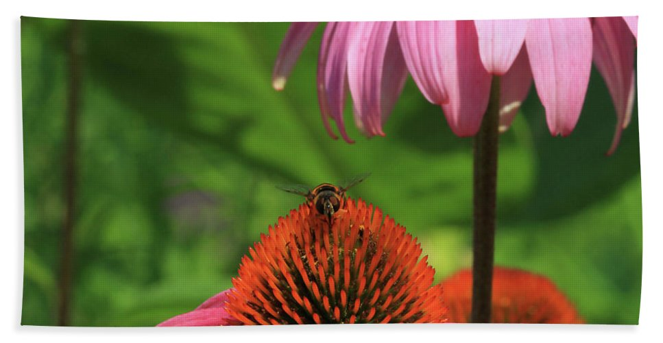 Flower Beach Towel featuring the photograph Atop A Cone by Karol Livote