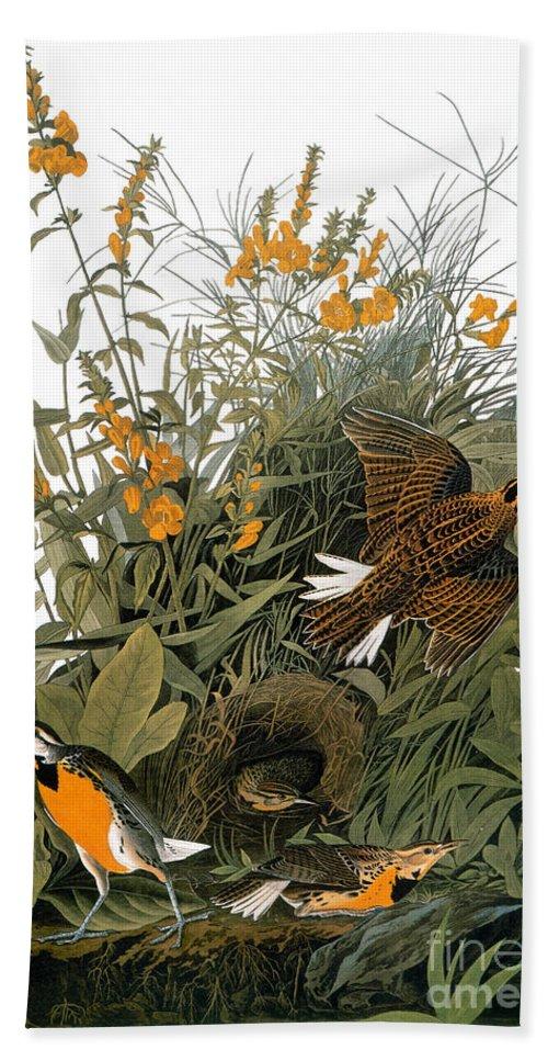 1838 Beach Towel featuring the photograph Audubon: Meadowlark by Granger