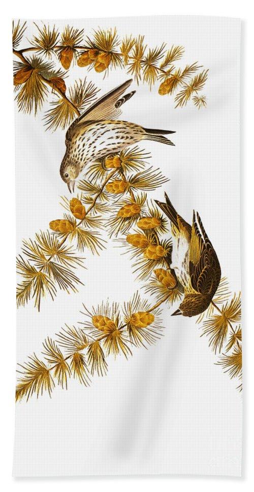 1838 Beach Towel featuring the photograph Audubon: Siskin by Granger